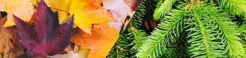 hardwood softwood leaves